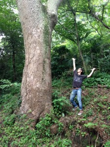 裏山にある大きな楠。すごく力強い大木。ここでも踊る予定